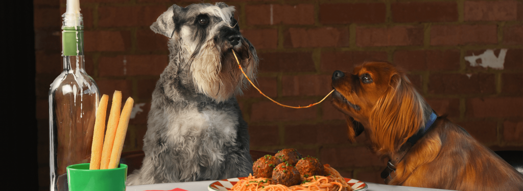 Valentine's Day Lady and the Tramp - Frankie & Benny's Recreation